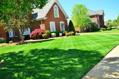 lawn aeration and mowing